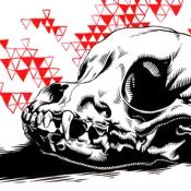 chihuahua_skull