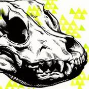 pitbull_skull