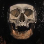 patrick_mathews_vita_brevis_skull_submission