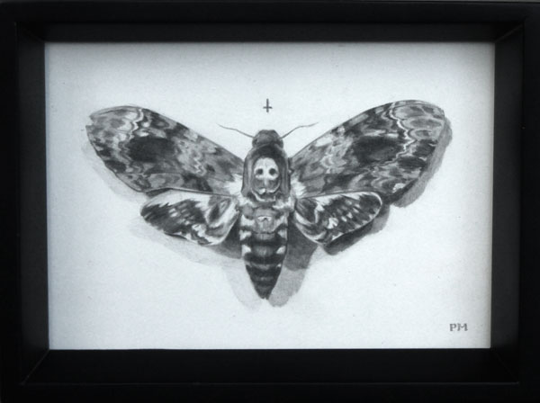 Death's Head Moth drawing